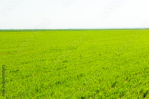 Keuken foto achterwand Lime groen beautiful Green field