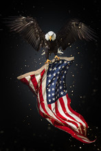 Bald Eagle Flying With American Flag