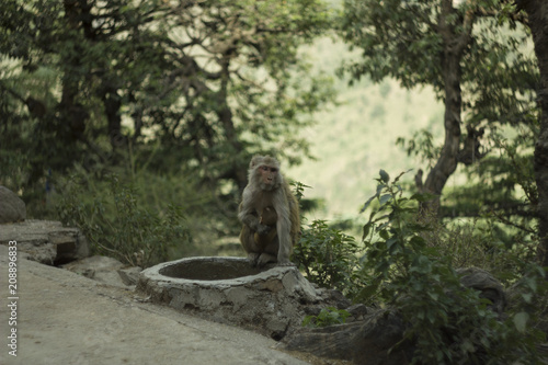 Foto op Canvas Aap a monkey with baby sitting on the track in the Forest