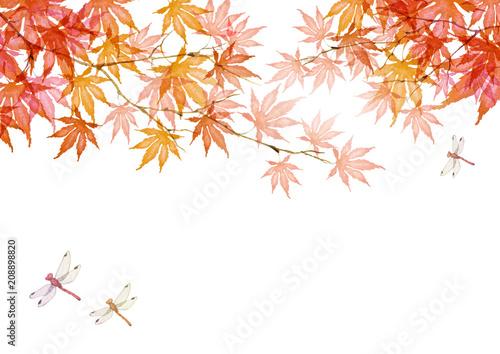 秋 紅葉 赤とんぼ 背景 Adobe Stock でこのストックイラストを購入して