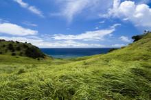 夏の海と草原