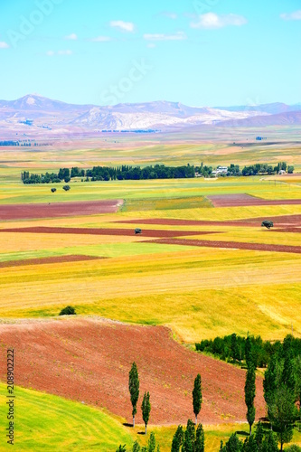 In de dag Meloen Field - Hasbey Village Sivas, Turkey