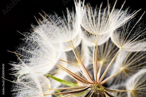 Fotobehang Macrofotografie Dandelion seeds macro on black