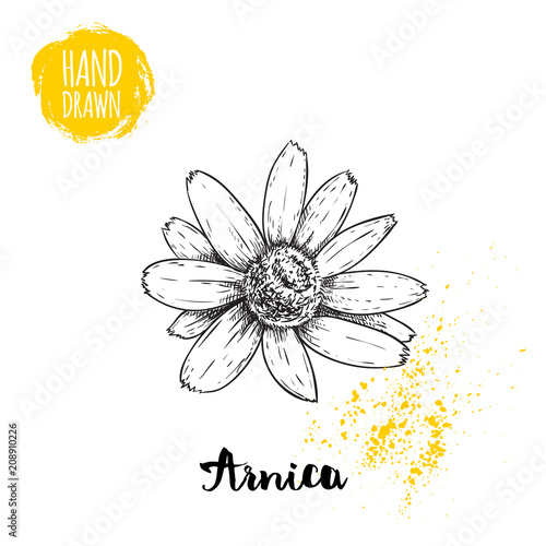 Hand drawn sketch style arnica flower Wallpaper Mural