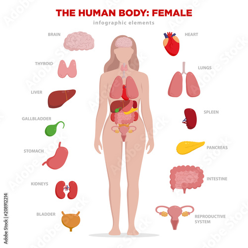 Human Anatomy Infographic Elements With Set Of Internal Organs