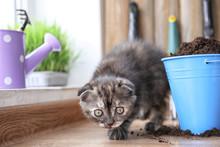 Cute Kitten Near Bucket With Soil On Floor At Home