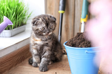 Cute Kitten Near Bucket With S...