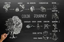 Infographic Design For Cocoa Journey On Blackboard