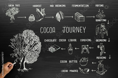 Fotomural  Infographic design for cocoa journey on blackboard