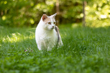 Beautiful Calico Cat In Tall G...