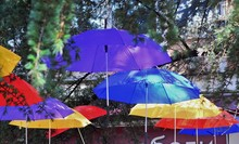 Bright Colorful Umbrellas Weigh Among The Trees And Decorate The Street Of The City.