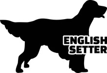 English Setter Silhouette Real Word