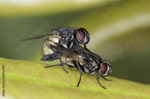 Fényképezés  moscas