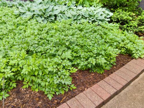 Fotografie, Obraz  Green leafy garden plants with brick border