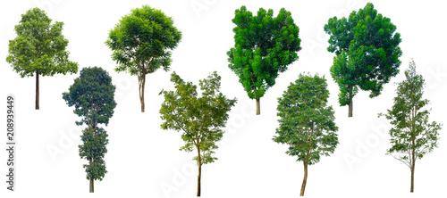 Fotografia, Obraz  Tree isolated on a white background.