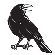 Graphic Black Crow Isolated On...