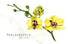 Botanical Illustration. Postca...