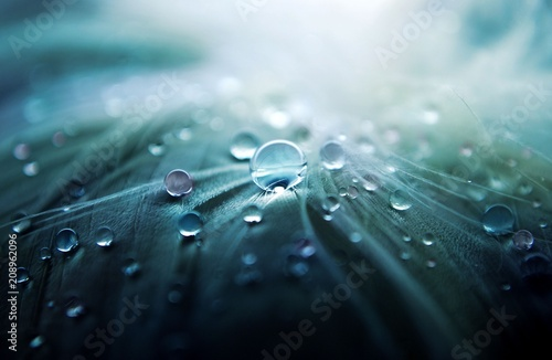 Macro photographie The cold water drops.