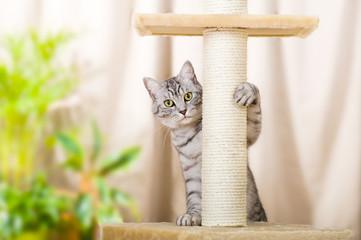 Getigerte Katze am Kratzbaum