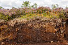 Cross-section Of An Irish Peat...