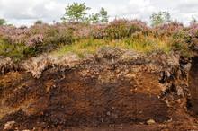 Cross-section Of An Irish Peat...