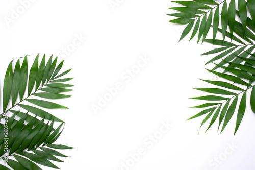 Αφίσα  Green palm leafs isolated on white background