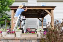 Man Staining A Backyard Gazebo...