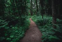 Lush Green Pacific Northwest F...