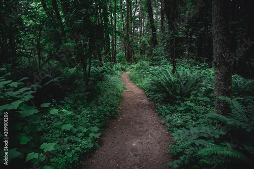 Foto op Canvas Weg in bos Lush green Pacific Northwest forest hiking trail