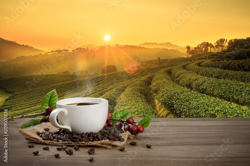 Hot coffee cup with fresh organic red coffee beans and coffee roasts on the wooden table and the black background with copyspace for your text. - 209007836