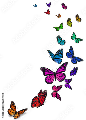 Fototapeta Beautiful monarch butterfly