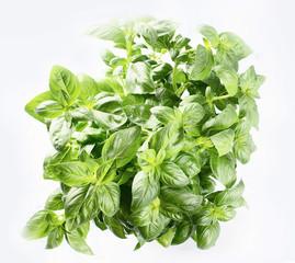 Fototapeta Przyprawy Green fresh basil