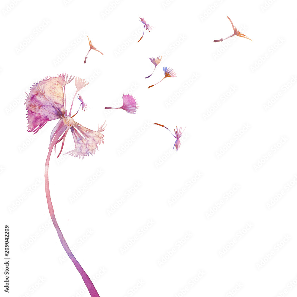 Fototapety, obrazy: Watercolor dandelion illustration. Single blowball on white background. Hand painted card design.