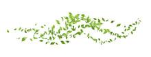 Green Flying Leaves