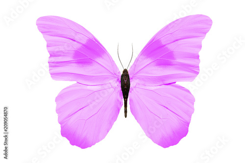 Fototapeta  purple butterfly isolated on white background