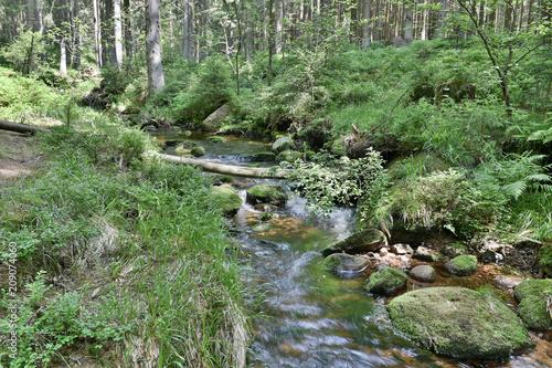 Fototapety, obrazy: Bach im Harz