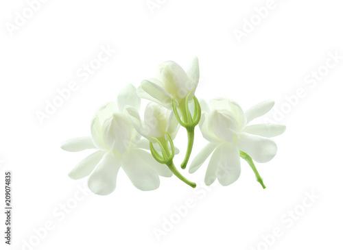 White jasmine on white isolated background Wallpaper Mural
