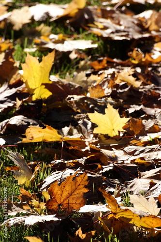 Foto op Aluminium Bruin caduta foglie stagione autunnale