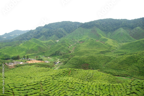 Fotobehang Wit View tea plantations in Cameron Highlands, Malaysia