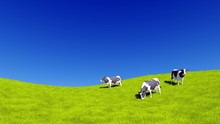 Countryside Landscape With Mottled Dairy Cows Grazing On Green Meadow Against Clear Blue Sky Background With Copy Space. 3D Illustration.