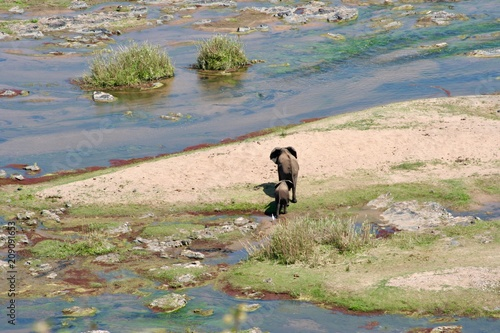 Recess Fitting Elephant Mother and Baby Elephant - River Crossing - Safari