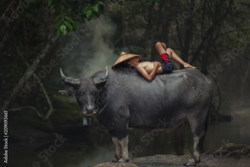 Poster de jardin Buffalo Asia children sleeping on water buffalo at rural.
