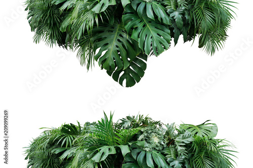 Garden Poster Plant Tropical leaves foliage plant bush floral arrangement nature backdrop isolated on white background, clipping path included.
