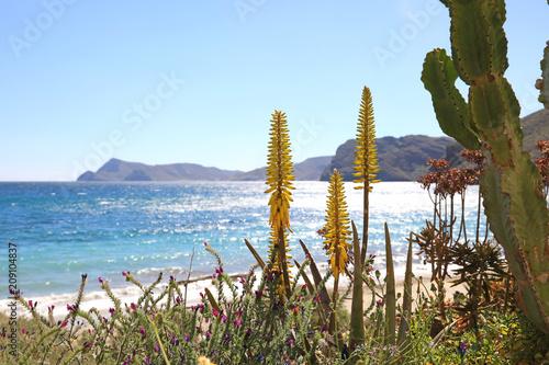 Fotografie, Obraz costa mediterránea aloe vera almería  4M0A0812-f18