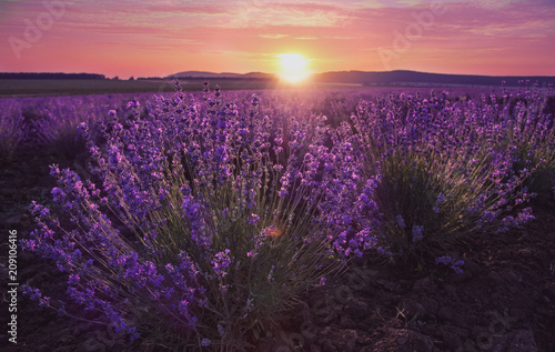 Fotobehang Aubergine Lavender fieal and beautiful sunset