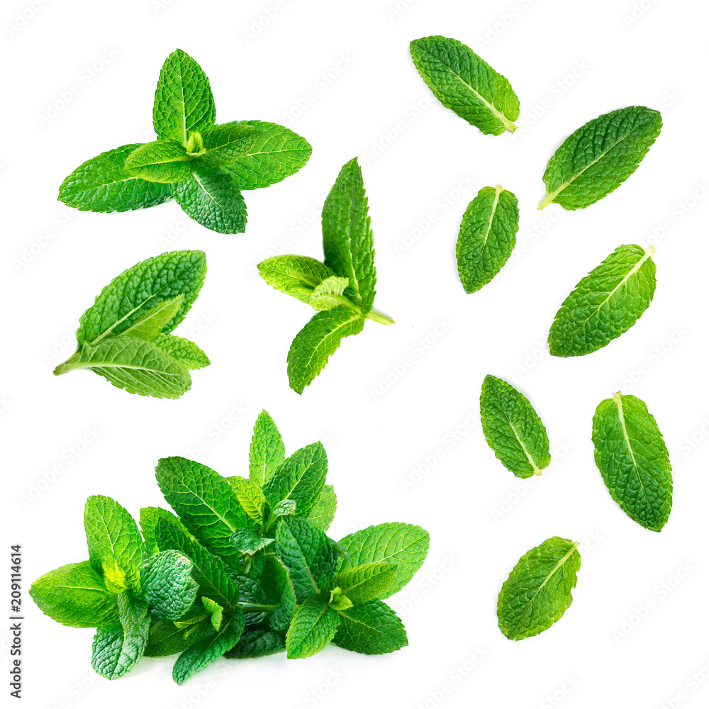 Fresh mint leaves collection  isolated on white background, top view. Close up of peppermint.