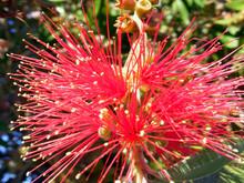 Ramas Con Flores De Colores En...