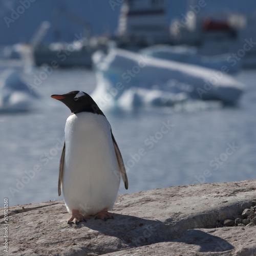 Poster Pinguin penguin