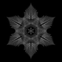 Leaf Snowflake