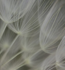 Abstract flower seed head